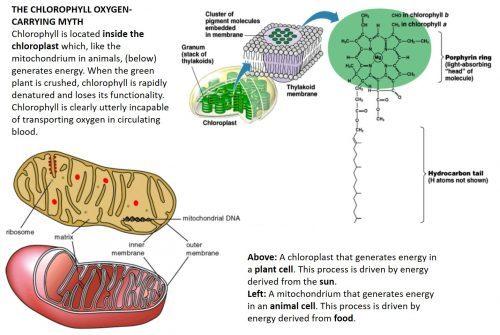 chlorophyll oxygen carrying myth